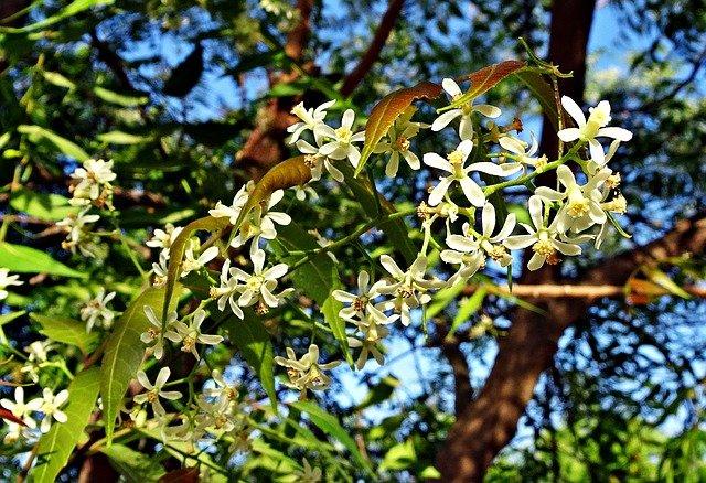 strom, květ, listy